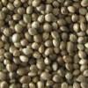 Sell hemp seeds