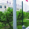 Chicken wire fence, wire fence the mountains of Hebei stocking manufacturers specifications poultry