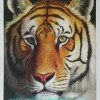 sell 100% handmade animal oil painting