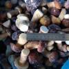 Supply IQF mushroom