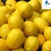 Top Sale Lemon juice powder