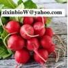 Radish Red