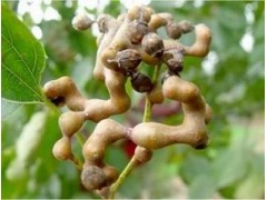 2016 product Good quality Japanese Raisin Tree Seed Extract
