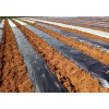 Agriculture orchard wildly used silver black perforated plastic mulch film punch hole price