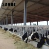 Prefab Steel Structure Barn Prefabricated Cow Shed Building Cattle Shed